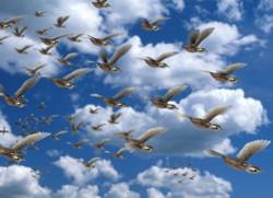 Птицы летают