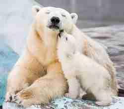 Умка и мама-медведица